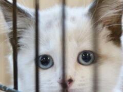 Общественники предлагают вознаграждать граждан, забравших животное из приюта